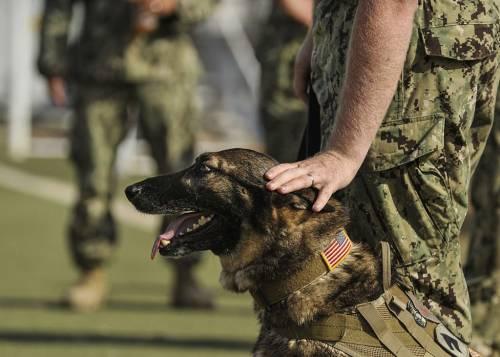 dog basic obedience