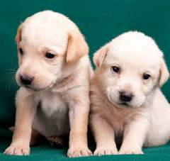 Dog breeding tips 2