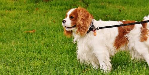 Train Your Dog With These Great Tips 1