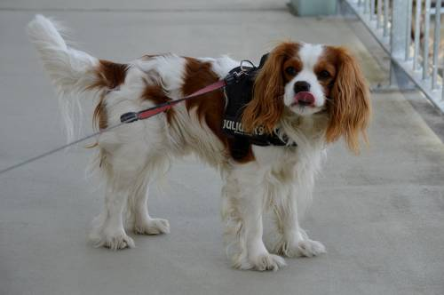 Proven Methods Of Effective Dog Training. 1