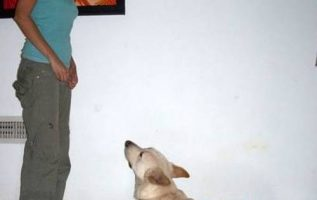 Dog Training Tips That Will Keep You And Your Dog Happy 4