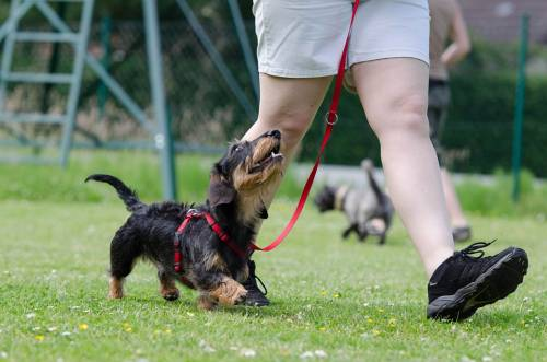 You Will Not Believe How Easy It Is To Train Your Dog When You Follow These Tips 1