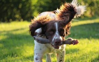 Need To Know Facts About Canine Training 3
