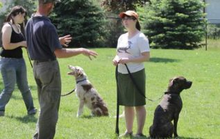 Valuable Training Your Dog Tips That Really Work 3