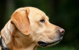 Learn Consistent Puppy Training Skills to Maximize Your Results 3