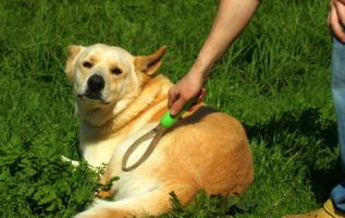 Simple And Easy Canine Training Tips 4
