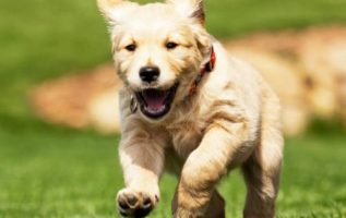 Puppy Training Tips That Work For Every Breed 4
