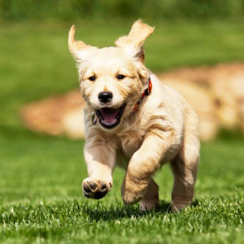 Puppy Training Tips That Work For Every Breed 1