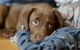 Great Canine Training Tips That Can Work For Your Dog! 3