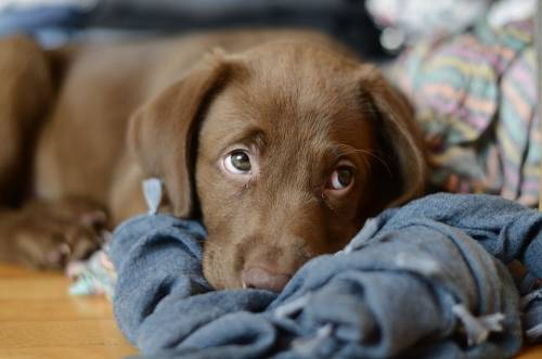Great Canine Training Tips That Can Work For Your Dog! 1