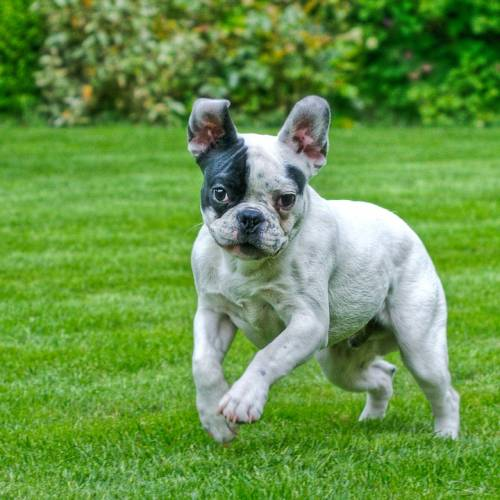 Great Methods To Help Train Your Dog 1