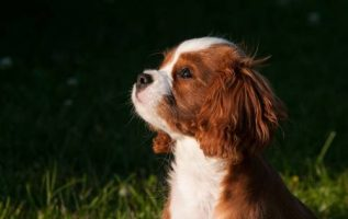 Sanity Saving Tips For Training Your Dog Today! 4