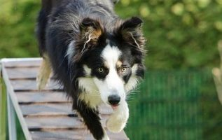 Ways You To Can Be More Effective With Your Training Your Dog 4