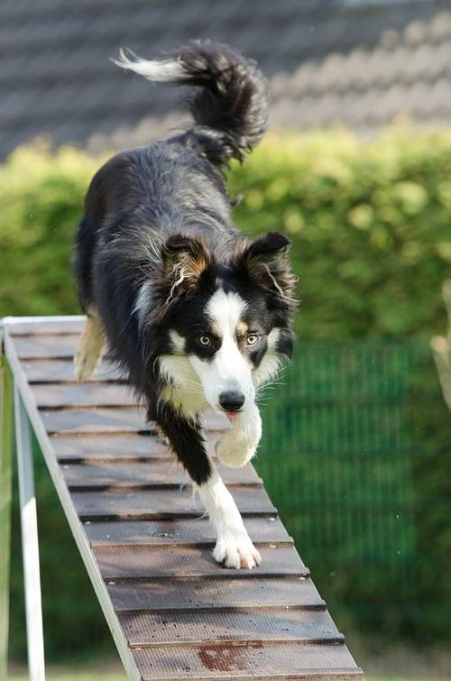 Ways You To Can Be More Effective With Your Training Your Dog 1