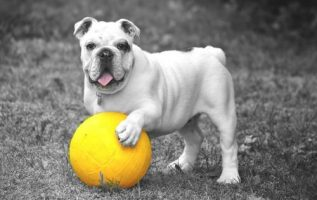 Tips For Raising A Wonderful Family Dog 3