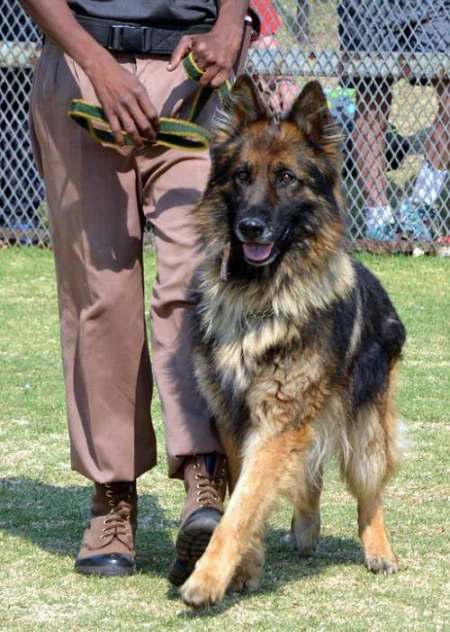 Simple Tips And Tricks To Help You Train Your Dog 1