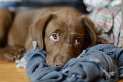 Expert Tips To Make Dog Training Easier 1