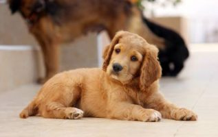 Tips For Raising A Happy And Healthy Dog 4
