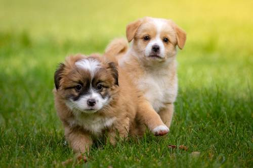Quick And Painless Tips For Training Your Dog 1
