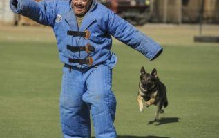 Have Fido Acting His Best With These Dog Training Ideas 4