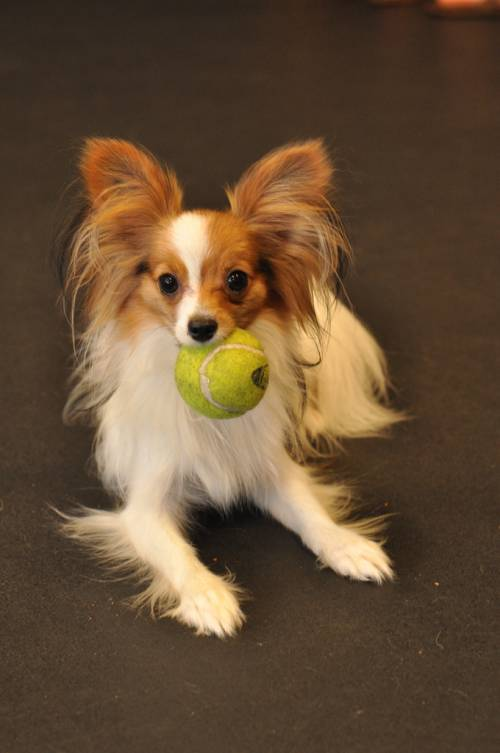 Great Tips To Help Train Your Dog 1
