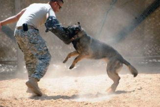 Useful Canine Training Tips & Tools 9