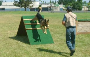 Getting The Most Out Of Your Dog Training Efforts 3