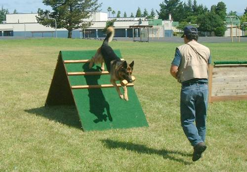 Getting The Most Out Of Your Dog Training Efforts 1