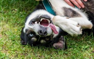 Dog Training Advice For Better Behaved Pets 4