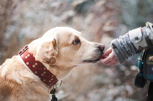 Great Ideas To Help You With Your Training Your Dog 1