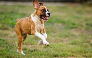 Hard Time Training Your Pooch? Try These Tips! 3