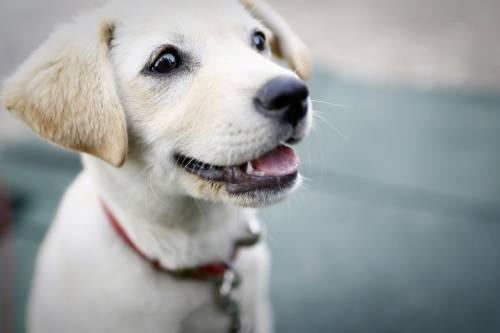Simple And Painless Puppy Training Tips For All Types 1