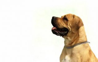Is Your Dog Misbehaving? Check Out These Helpful Tips! 4