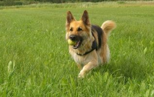 Handy Tips To Help You Successfully Train Your Dog 4