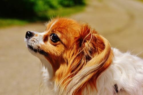 The Best Way To Easily Train Your Dog 1