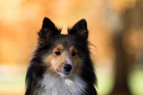Helpful Techniques To Train Your Family Dog 1