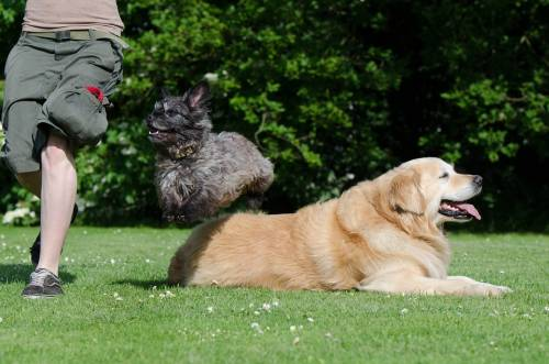Easy Methods To Help Train Your Dog 1