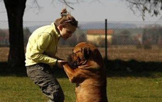Tips To Teach Any Dog New Tricks 4