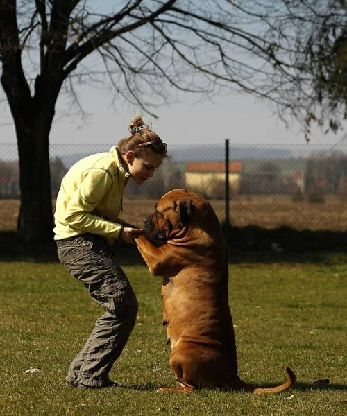 Roll Over! Tips For Training Your Dog 1