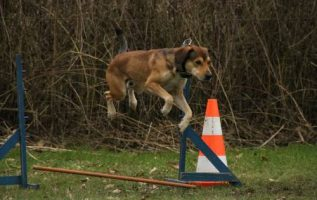Easy And Effective Tips For Training Your Dog 4
