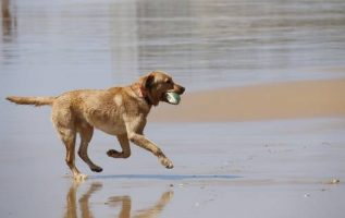 Check Out These Expert Dog Training Tips! 4