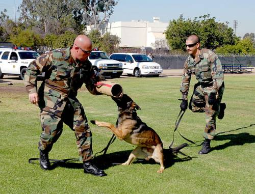 Make Canine Training Easier And More Effective With These Quick Tips 1