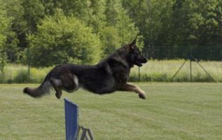 If Your Having A Difficult Time Training Your Dog, Try These Suggestions 4