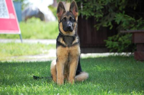 The Beginners Guide To Successful Dog Training 1