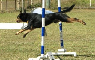 Amazing Tips That Make Training Your Dog Easier 3