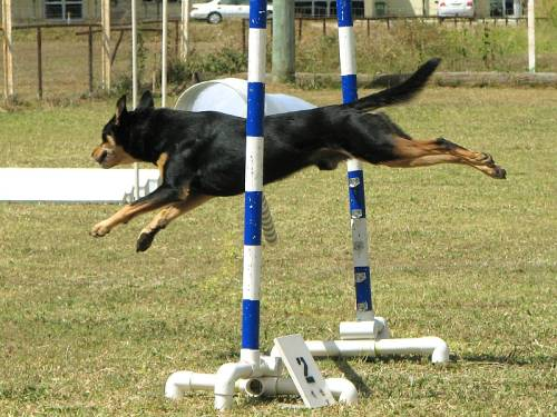 Amazing Tips That Make Training Your Dog Easier 1