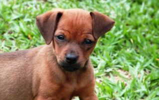 Dog Training Will Civilize Your Animal And Make Them Your Companion 4
