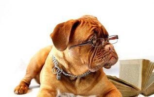 A World of Pups | Pet Grooming | 11209 | Brooklyn | Bay Ridge & Fort Hamilton 3