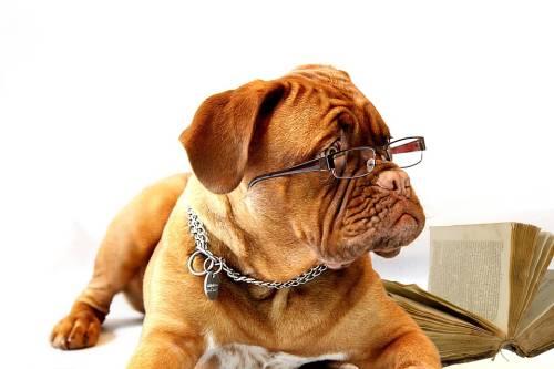 A World of Pups | Pet Grooming | 11209 | Brooklyn | Bay Ridge & Fort Hamilton 1