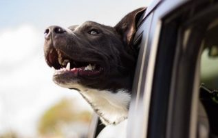 major league pets | Pet Grooming |  |  | 3